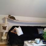 Katzenlandschaft Hängebrücke für Katzen Rassekatzen massiv