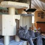 Kratzbaum Main Coon, Mega Kratzbaum für schwere Katzen