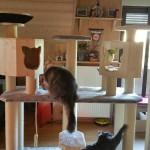 Kratzbaum große Katzen