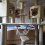Kratzbaum große Katzen, Krtzbaum Gigant mit 2 Holzhöhlen