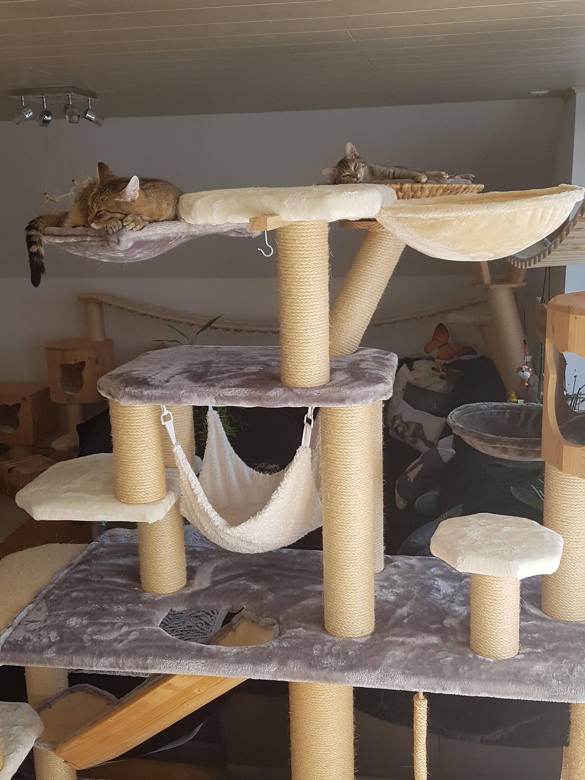 kratzbaum zu verkaufen kratzbaum bamberg liegemulde. Black Bedroom Furniture Sets. Home Design Ideas