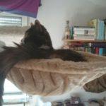 Liegemulden für Katzen