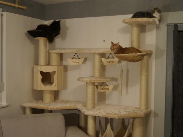Kratzbaumwelt, Katzenlandschaften für Stubentiger mit 3 großen Katzen