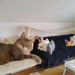 Spiellandschaft für Katzen Kletterlandschaft Laufsteg Rassekatzen