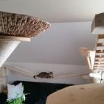 Wandkratzbäume für Katzen Katzenlandschaft Catwalk Laufsteg