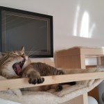 Wandliegemulde für Katzen Katzenlandschaft Kletterlandschaft Katzen