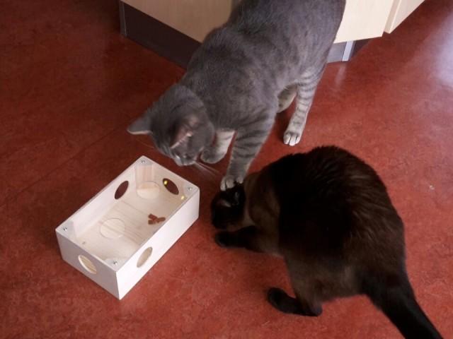 Katzen spielen gern, dabei noch Nahrung durch Intelligenz aufzunehmen ist die perfekte Beschäftigungsmöglichkeit