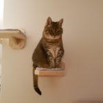 Aufstieg für Katzen