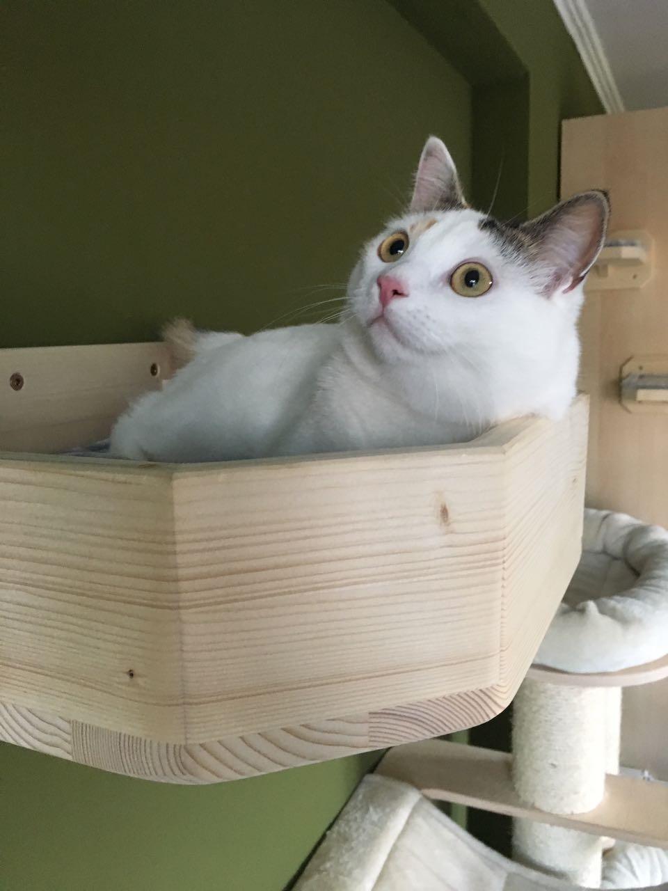 bettchen f r katzen sonderanfertigung kletterlandschaft. Black Bedroom Furniture Sets. Home Design Ideas