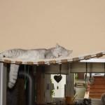 Catwalk Hängebrücke Katzen