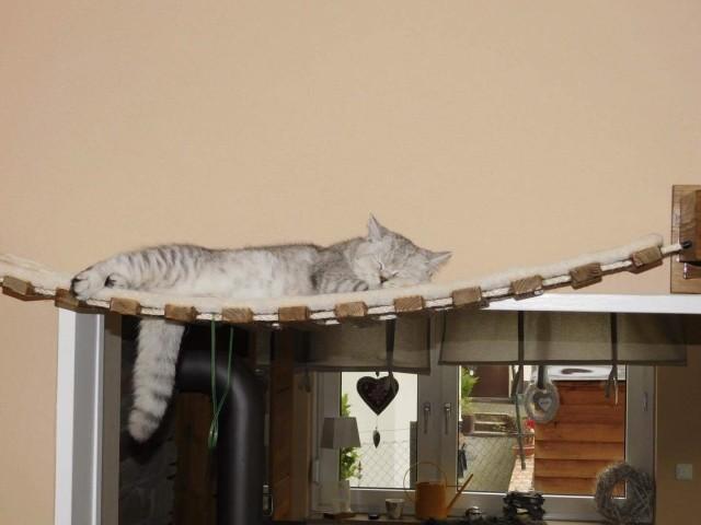 Hängebrücken für Katzen mit Sisalmatte sehr bequem und funktional