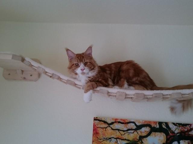 Hängebrücke als Liegefläche auch für große Katzen geeignet