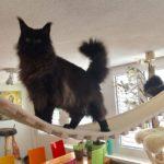 Catwalk für Katzen