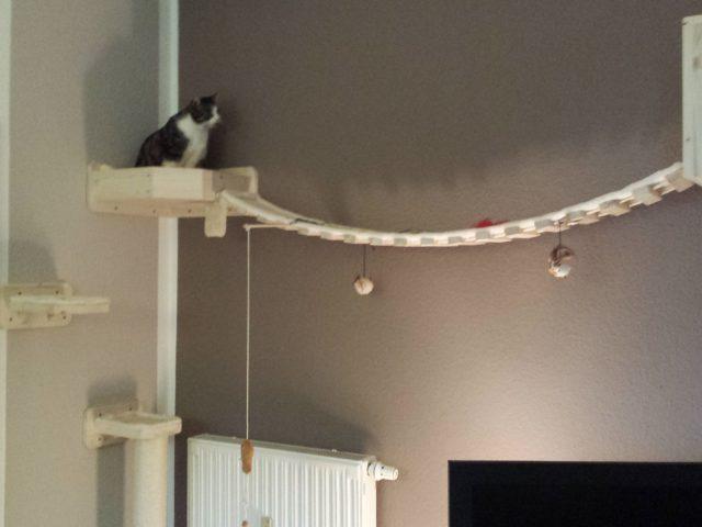 Catwalk mit Halterung und Hängebrücke somit wunderschöne Katzenlandschaft