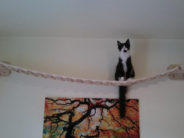 Katze sitzt auf Catwalk und genießt die Aussicht, Hängebrücke Catwalk mit Sisalmatte
