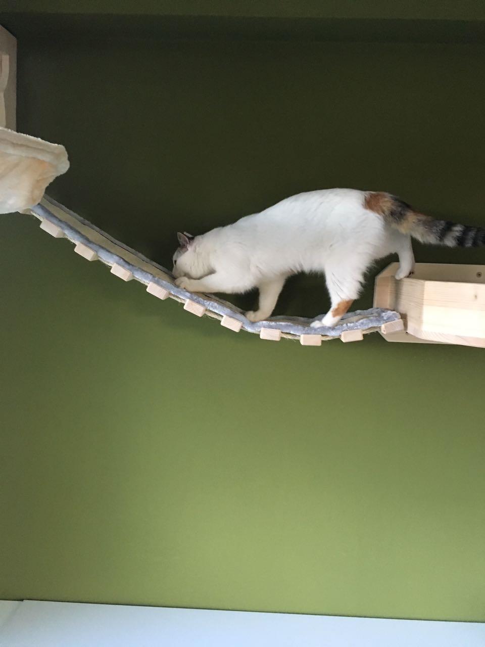 wandkratzbaumsystem catwalk h ngebr cke kratzb ume f r. Black Bedroom Furniture Sets. Home Design Ideas