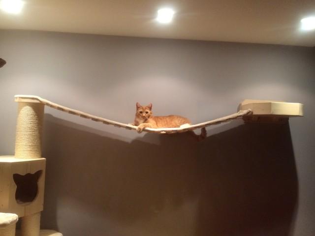 Catwalk Hängebrücke mit Hauskatze, Wandhalterung