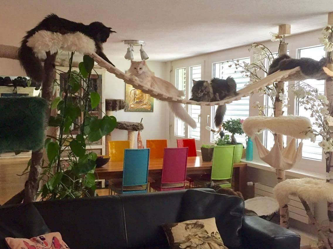 h ngebr cke f r katzen sonderanfertigung catwalk. Black Bedroom Furniture Sets. Home Design Ideas