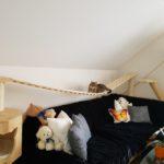 Hängebrücken für Katzen