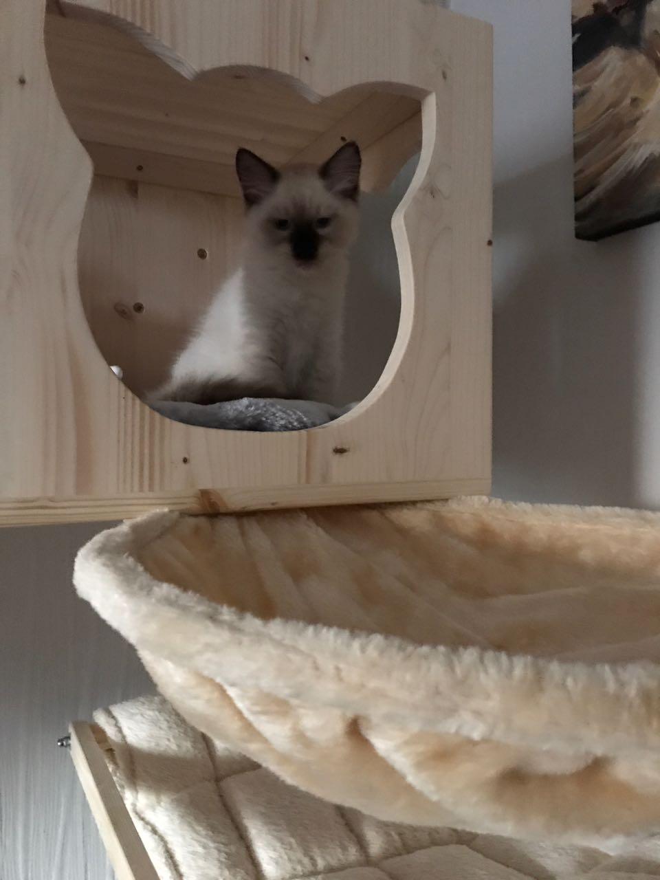 h hle liegemulde f r katzen wandkratzbaum kissen f r. Black Bedroom Furniture Sets. Home Design Ideas
