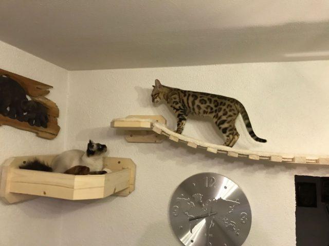Hängebrücke für Katzen,