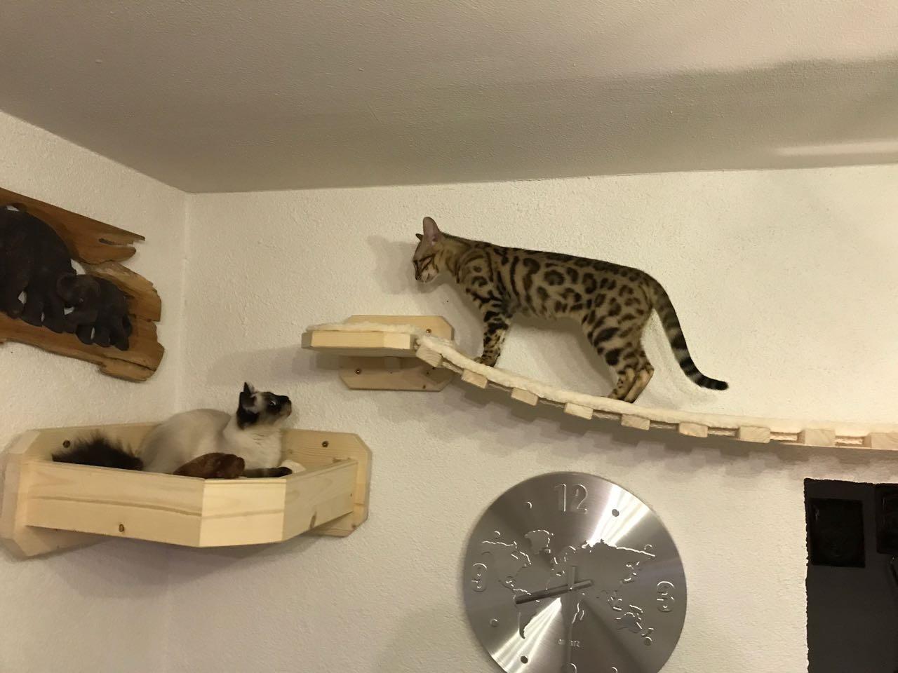 Catwalk Selber Bauen katzen wand selber bauen finest cool size of wandtattoo selber