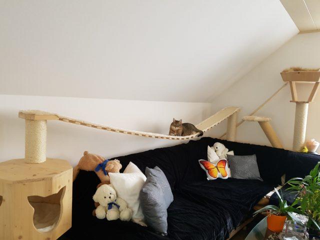 Hängebrücken für Katzen, 3 Meter langer Catwalk, Catwalk für Model