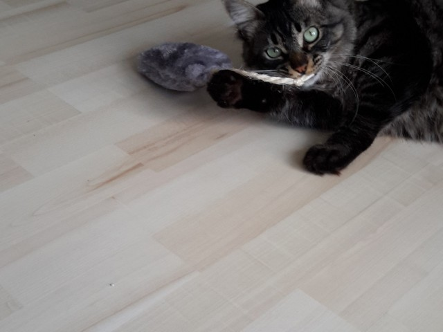 Katzen lieben die Katzenkissen mit Katzenminze