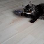 Katzenminzespiel für Katzen Edelplüsch
