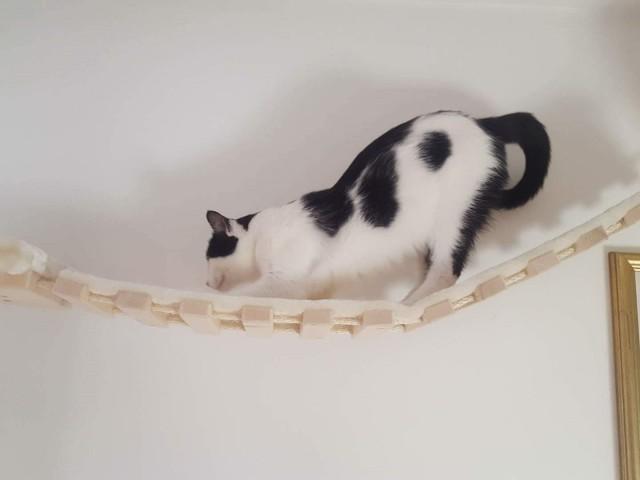 Katze nutzt Ihre Krallen zum kratzen auf der Sisalmatte der Hängebrücke