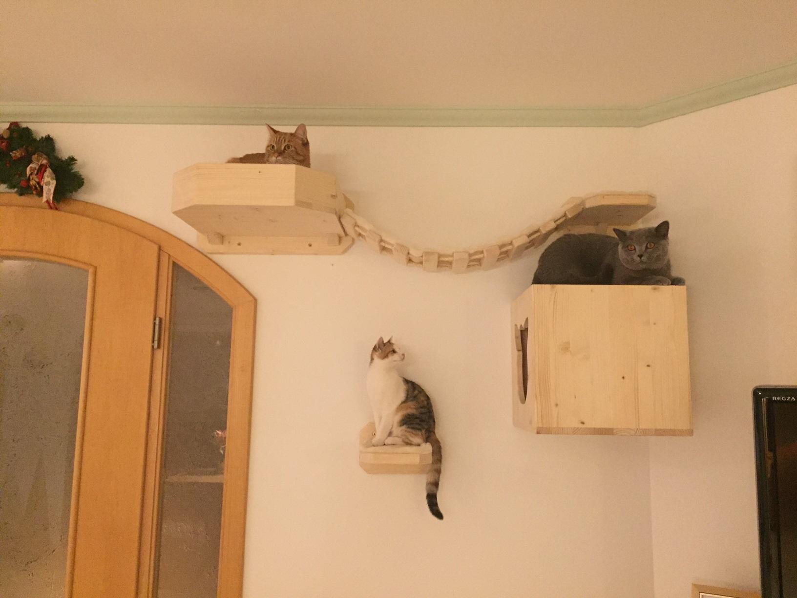 kratzbaum f r die wand f r katzen holzh hle h hle f r. Black Bedroom Furniture Sets. Home Design Ideas