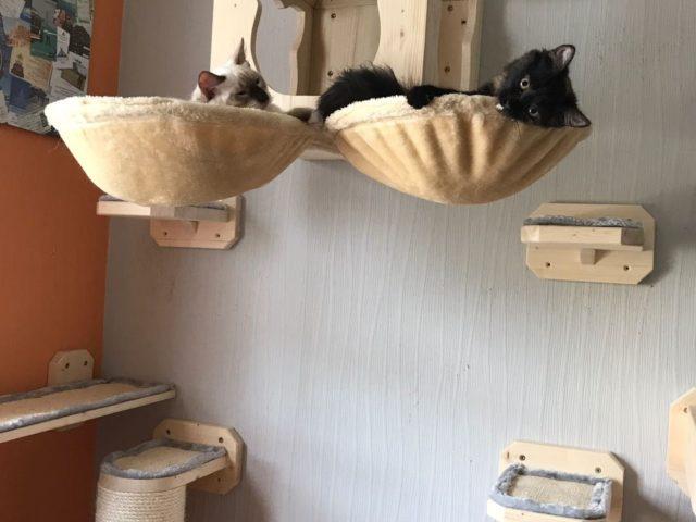 Wandkratzbaumsystem Catwalk Hangebrucke Kratzbaume Fur Katzen