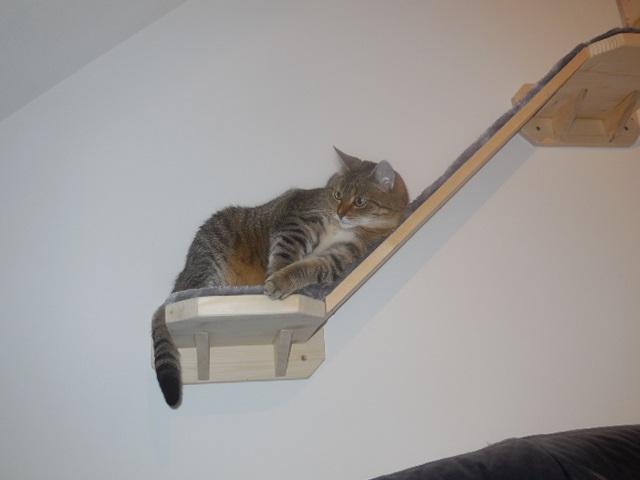 Katze schläft auf Stufe mit schrägen Aufstieg