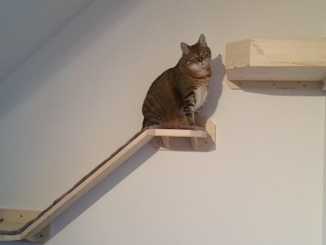 Katze sitzt auf Stufe für Wandkratzbaumsystem