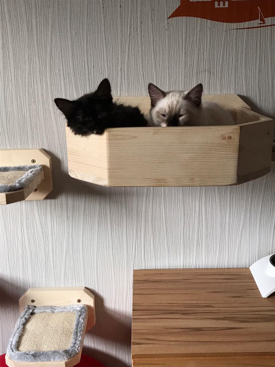 wandhalterung wandkratzbaum stabiler kratzbaum liegebettchen f r katzen. Black Bedroom Furniture Sets. Home Design Ideas