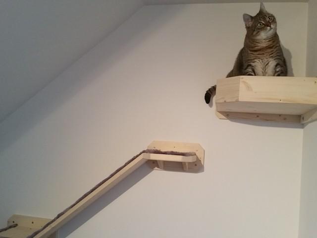 Katze sitzt in einer Wandhalterung