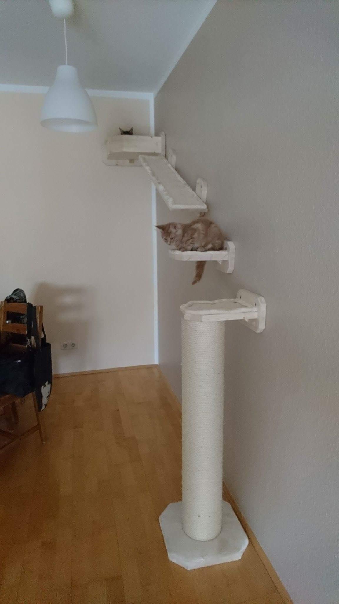 wandkratzbaum laufsteg f r katzen catwalk xxl stamm. Black Bedroom Furniture Sets. Home Design Ideas