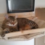 Bettchen für Katzen Wandhalterung massiv Kratzbaum