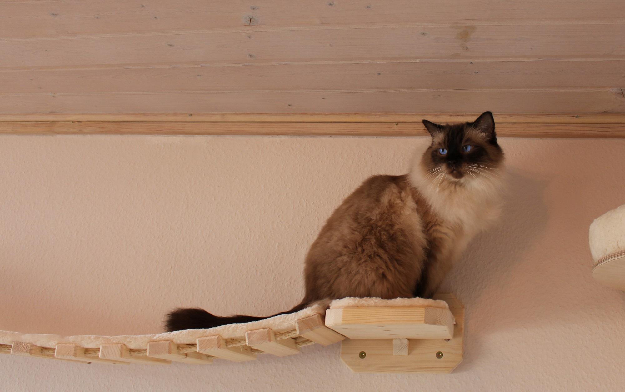 catwalk f r katzen h ngebr cke f r katzen liegemulde xxl. Black Bedroom Furniture Sets. Home Design Ideas
