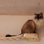 Wandkratzbaum, Wandkratzbaumsystem, Hängebrücke für Katzen