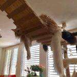 Hängebrücke für Katzen