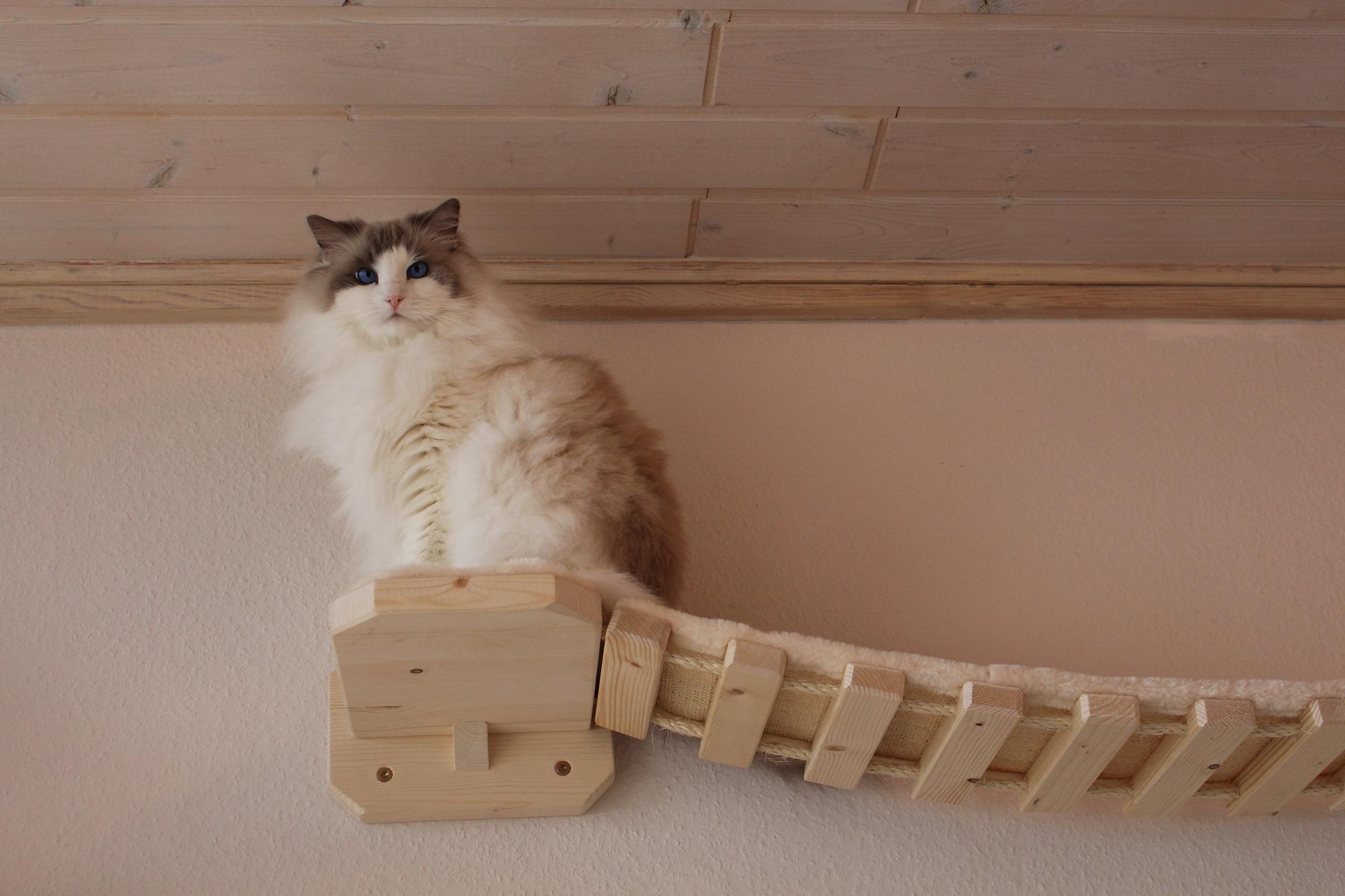 Catwalk Selber Bauen kratzbaum hersteller sonderanfertigung katzenlandschaft