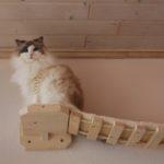 Hängebrücke für Katzen, Catwalk, sicherer Laufsteg, Wandkratzbaum