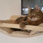 Katzenlandschaft massiv Katze Körbchen Edelplüsch
