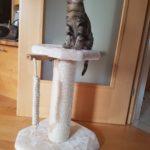 Kratzbaum Kitten