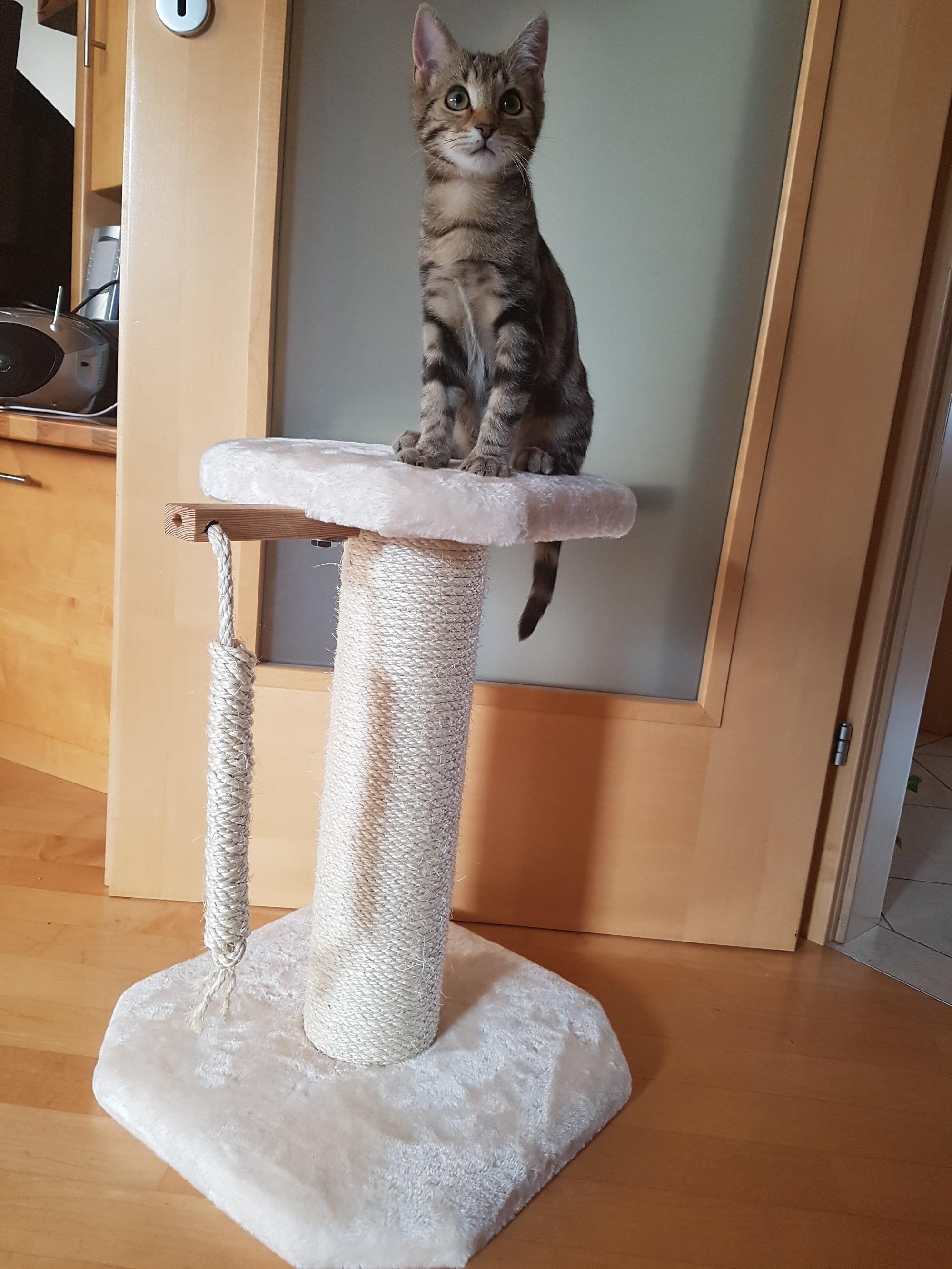 kratzbaum kitten stabiler kratzbaum katzenkinder individueller kratzbaum. Black Bedroom Furniture Sets. Home Design Ideas