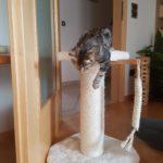 Kratzbaum für Kitten