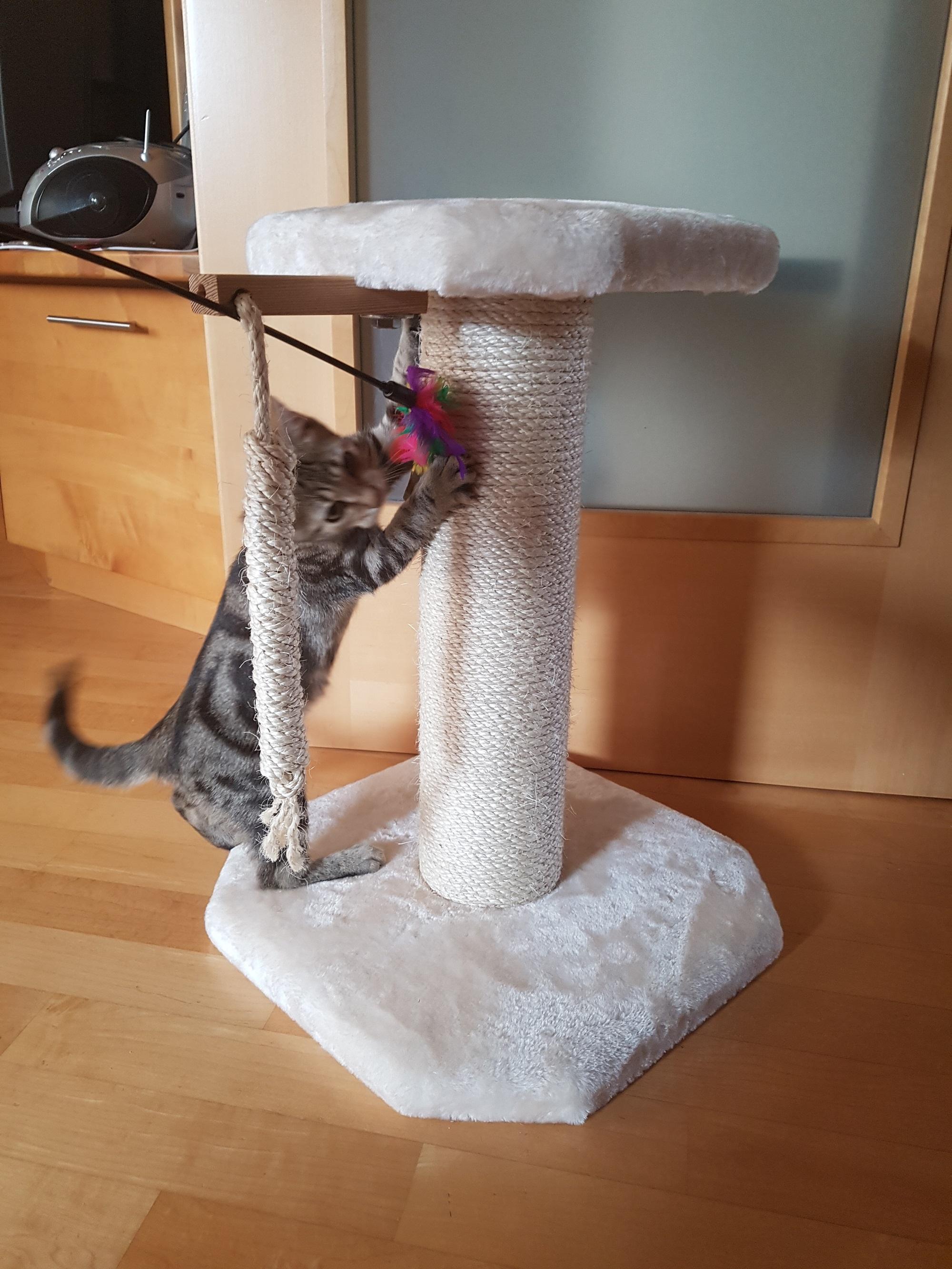 naturkratzbaum f r kitten individuelle sonderanfertigung kratzbaum f r kitten. Black Bedroom Furniture Sets. Home Design Ideas