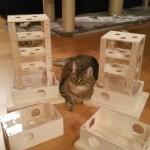 Intelligenzspiel für Katzen