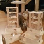 Intelligenzturm Katzen